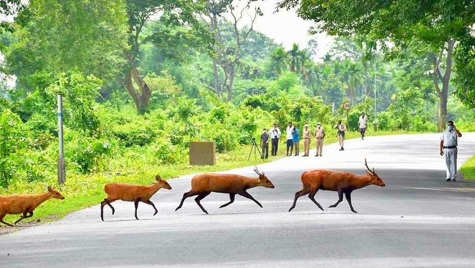 Animals crossing the NH 37 at Kaziranga National Park